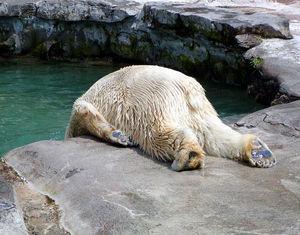 モチベーション低い白熊